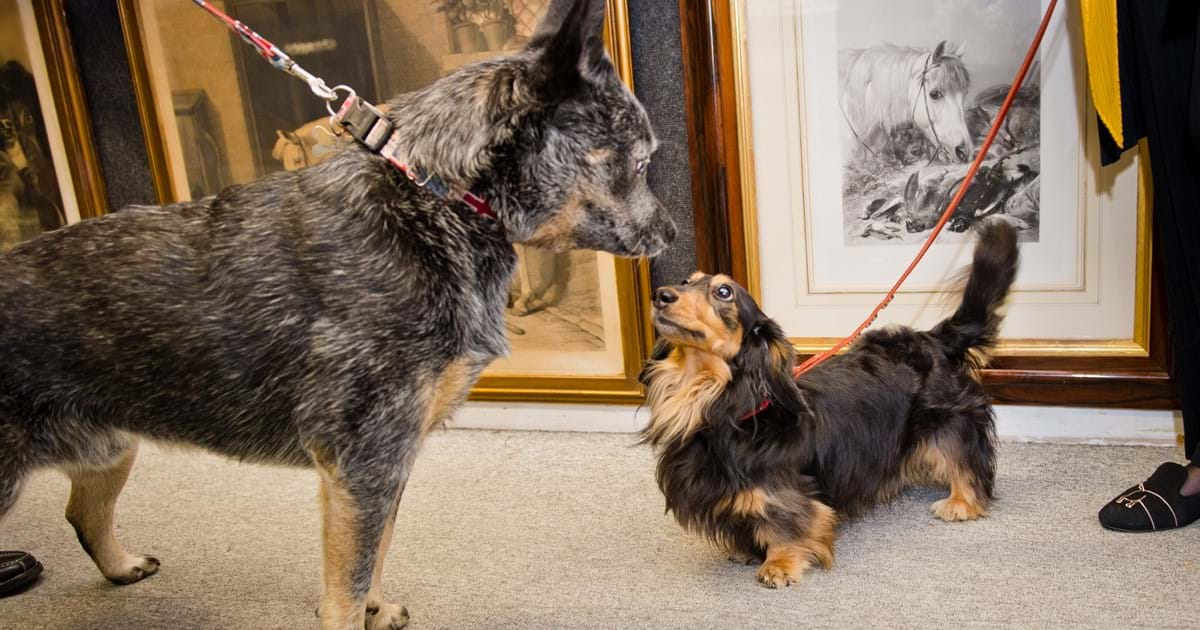 Dogs and their Owners: A Private View Image