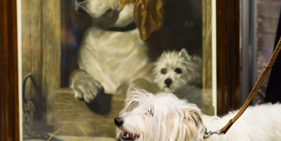 Dogs and their Owners: A Private View Module